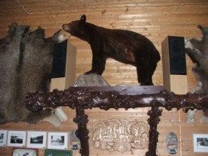 Roar Moe, oldebarnet til Daniel Bjørnejeger, er selv en ekte bjørnejeger. Han har skutt to kanadiske bjørner som begge er utstilt i hallen i Restaurant Bjønnhiet.