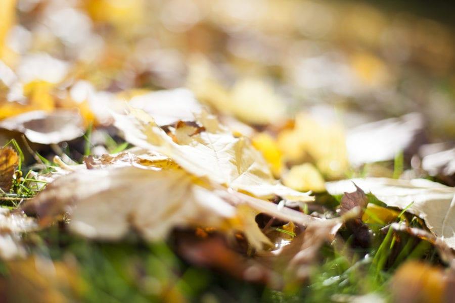 Høstjevndøgn hovedbilde