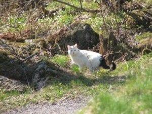 Huggormjakt; Katten Funny var på huggormjakt, men mistet interessen når hun oppdaget at Vincent fulgte med på henne og tok bilder.