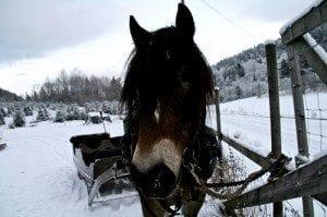 Hest med slede