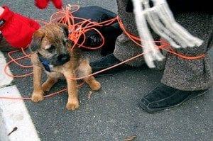 Hunder - hundevirvarr