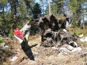 Store gamle trær; En litt vanskelig vei fra Pershusvannet og ned til Finntjern.