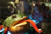 Neshornfrosk på Naturhistorisk museum