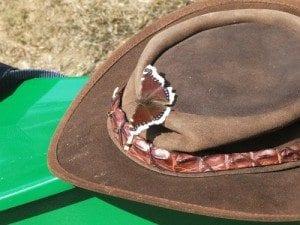 Dyreliv i skogen; På morgenkvisten fant vi en sommerfugl på hatten til Lene.