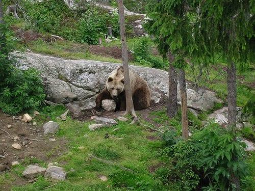 Vassfaret Bjørnepark (foto: Arild Nybø / Flickr.com)
