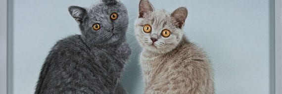 Two British Shorthair Cats (BSH), 2009 © David Kordansky og  Mindy Shapero Collection, Los Angeles, CA