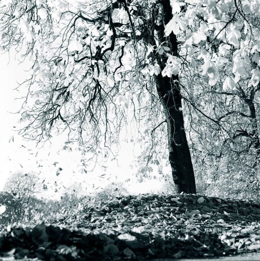 Nina Staff – Natur i bybildet 26. april – 15. mai hovedbilde