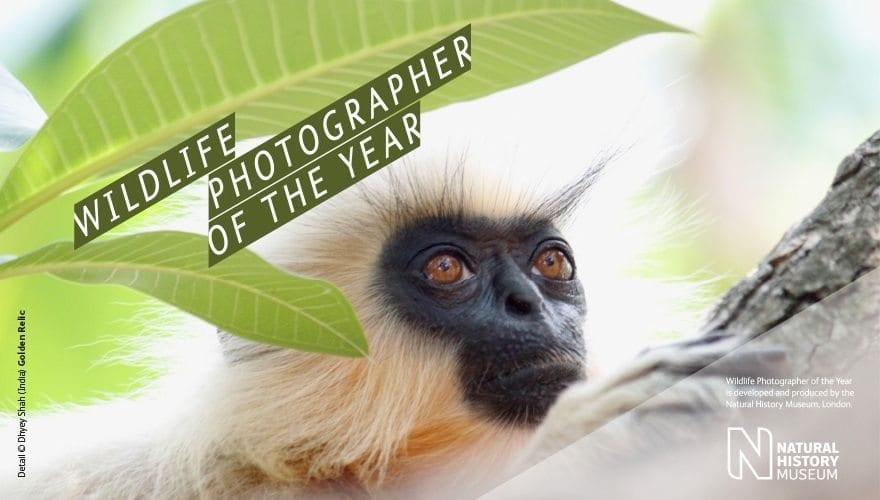 Wildlife photographer of the year hovedbilde