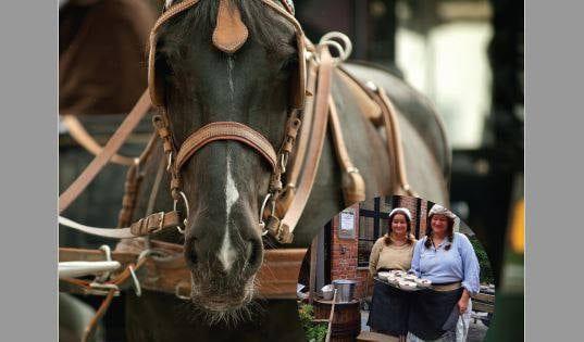 Gratis hest og kjerretur i Nydalen hovedbilde