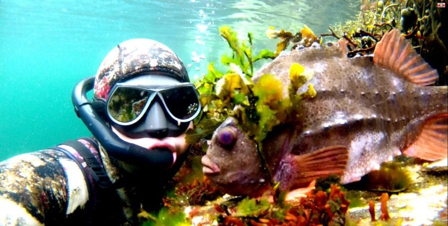 Snorkelsafari med marinbiologen hovedbilde