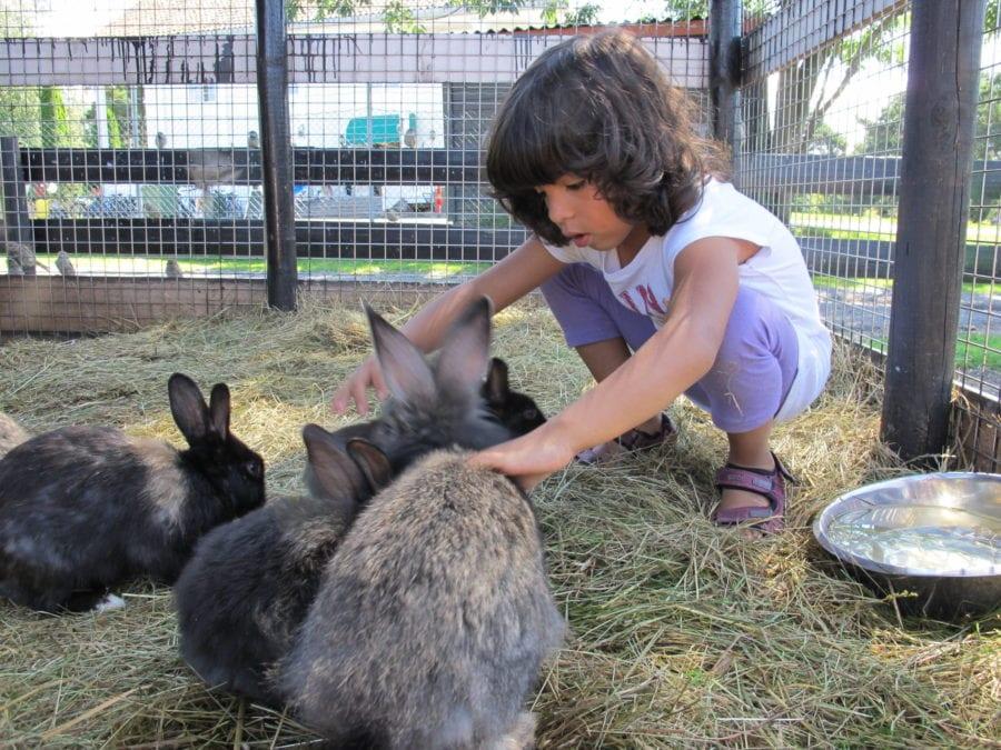 Kanincamp hovedbilde