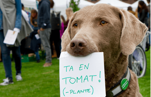 Miljøfestivalen Mitt Grønne Oslo! hovedbilde