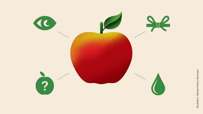 Eplets dag – alt om epler