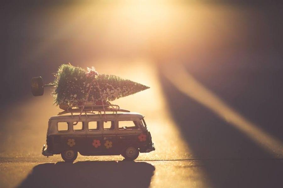 Juletrejakt i Eventyrskogen hovedbilde