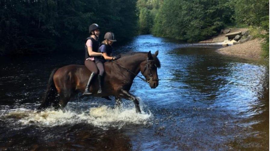 Ridekurs for alle på Nordmarka Rideskole hovedbilde
