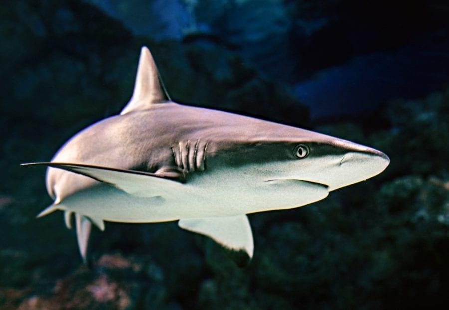 Eventbilde: Haisøndag