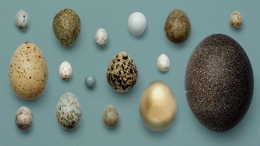 Eventbilde: Eggende dager i påskeferien
