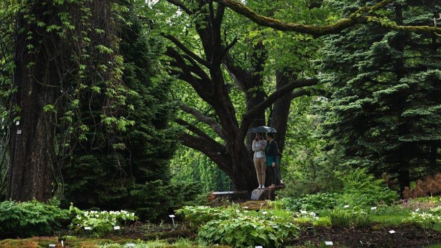 Eventbilde: Gratis omvisning i Botanisk hage