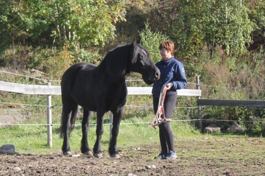 Eventbilde: Aktivitetstilbud med hest på dagtid