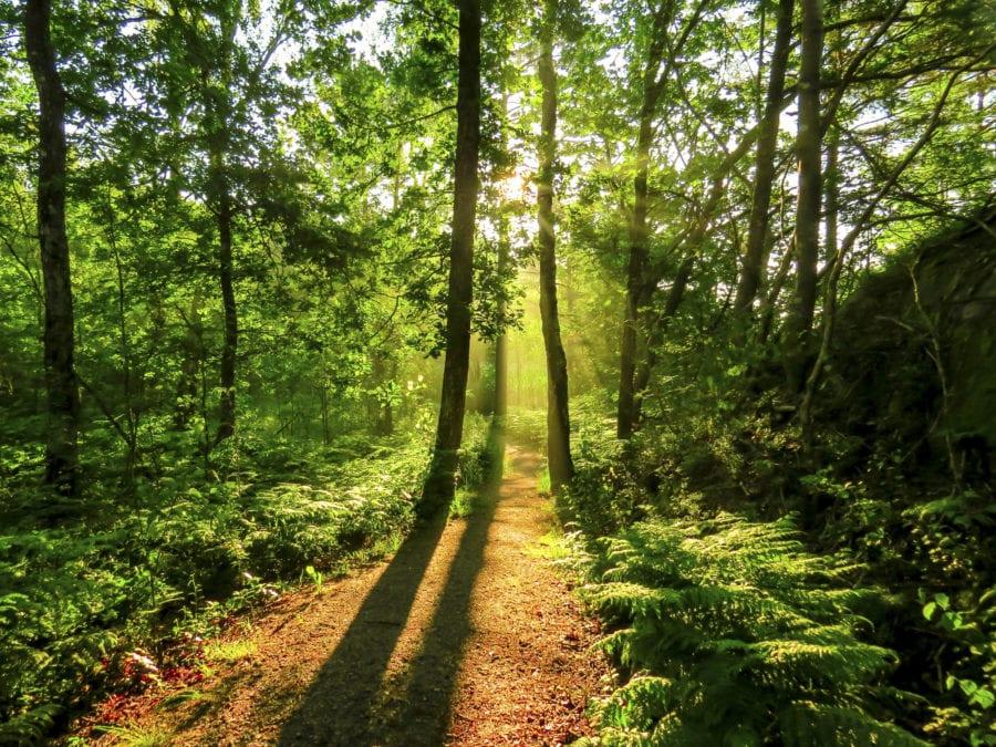 Naturvernsdag hovedbilde