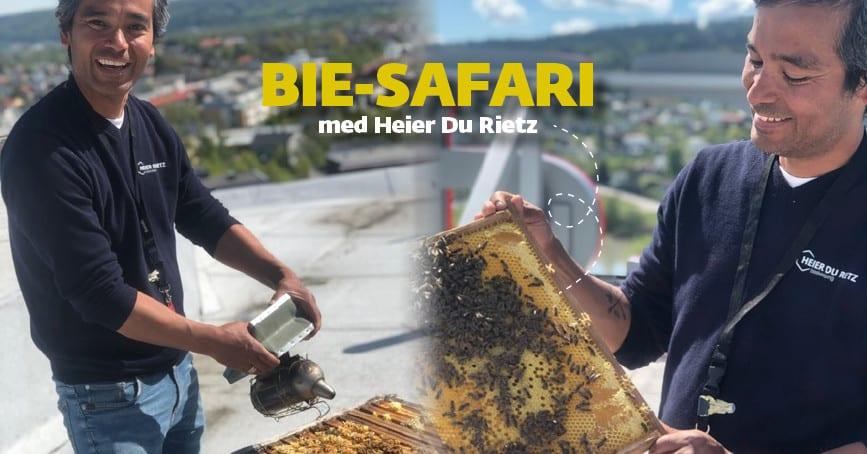 Biesafari på Hadeland Glassverk hovedbilde