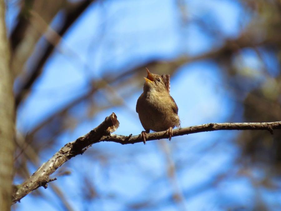 Fuglesangtur hovedbilde