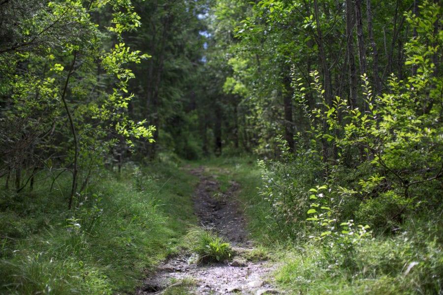 Nordisk naturnatt hovedbilde