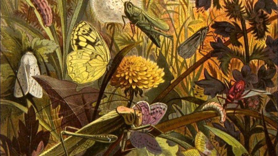 Gratis torsdager på Naturhistorisk Museum hovedbilde