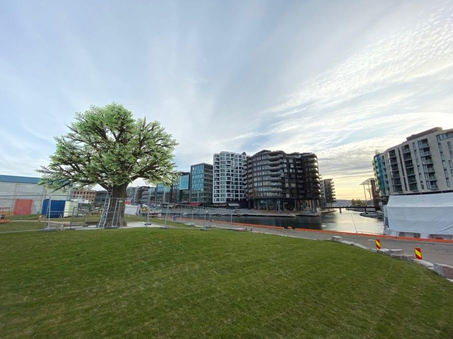 Tenning av Oslo Treet hovedbilde