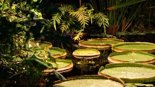 Lunsjomvisning i veksthus i Botanisk hage hovedbilde