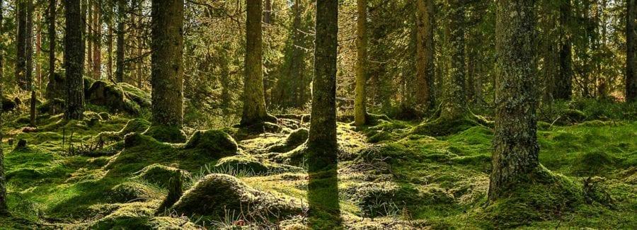 Eventbilde: Spennende høst på mystiske og vakre Finnskogen