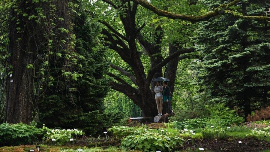 Botanisk hage – et levende museum hovedbilde