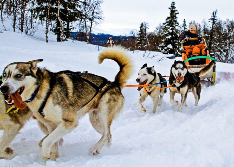 Prøv hundekjøring på Hadeland Glassverk hovedbilde