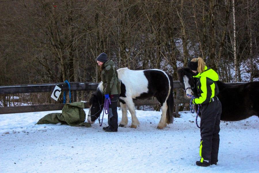 Lær å kommunisere og samarbeide med hesten hovedbilde