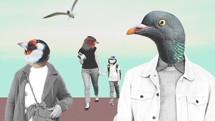 Fuglemorgen for morgenfugler hovedbilde