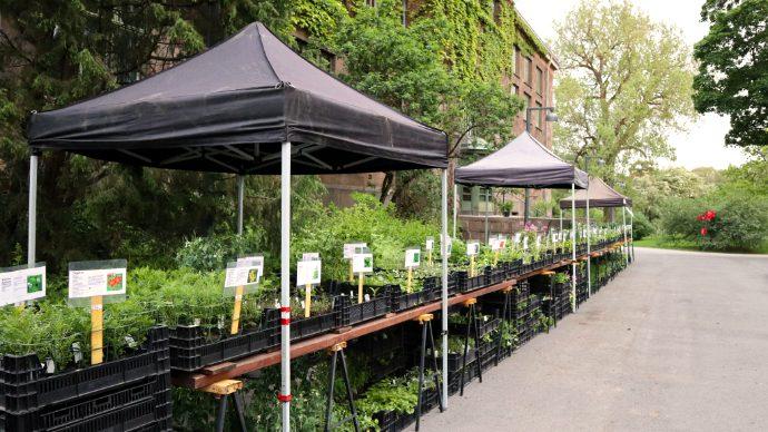 Plantemarked i Botanisk hage hovedbilde