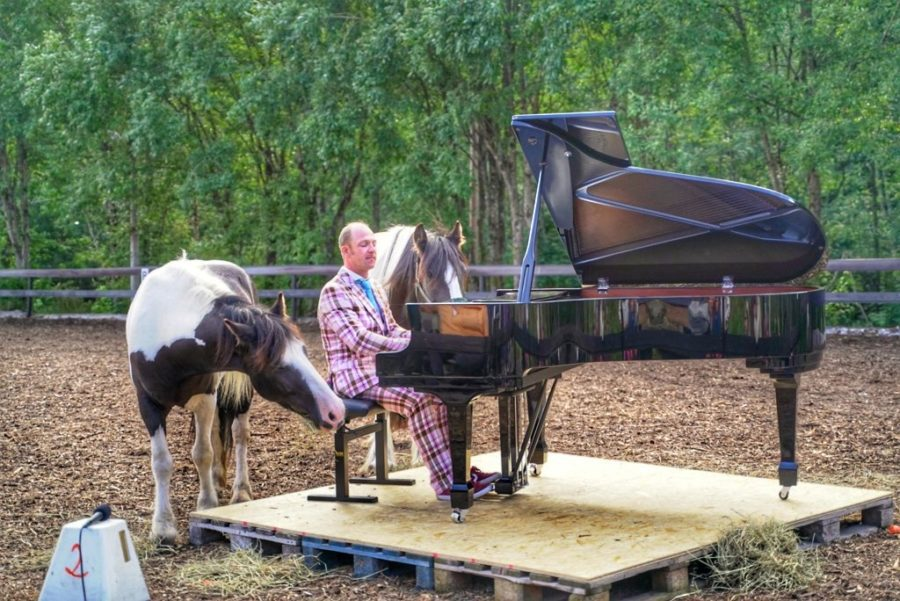 Mozart til hest – vi skaper magi hovedbilde