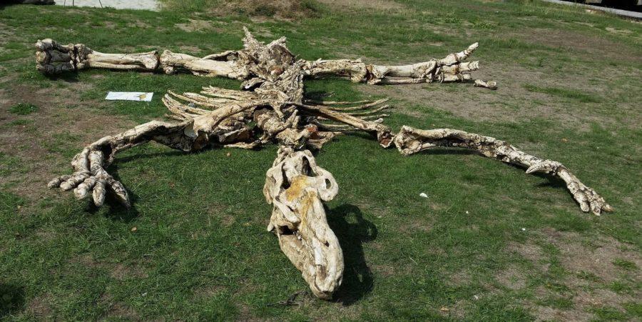 Eventbilde: Dinodag på Lilløyplassen